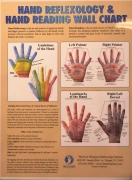 Hand Reflexology & Hand Reading Wall Chart
