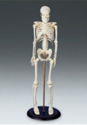 My First Skeleton - Tiny Tim