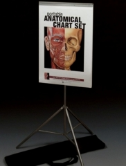 Portable Anatomical Chart Set
