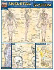 Quick Study Skeletal System
