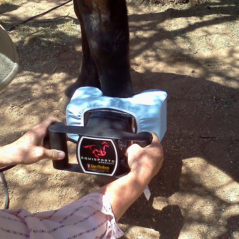 Equisports Equine Massager Equine Massagers And