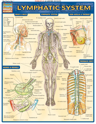 Lymphatic System - Charts | 227071 Quick Study