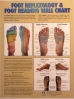 Foot Reflexology & Foot Reading Wall Chart