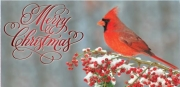 Christmas Cardinal Non-Folded Gift Certificate