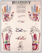 Reflexology Hands & Feet Chart - Flexible Lamination