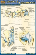 Quick Study Joints & Ligaments - Pocket Guide