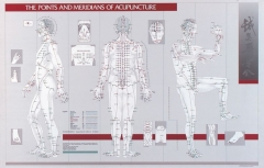 Points and Meridians of Acupuncture