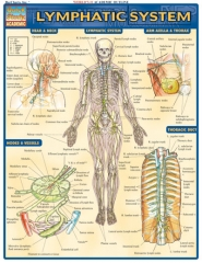 Quick Study Lymphatic System
