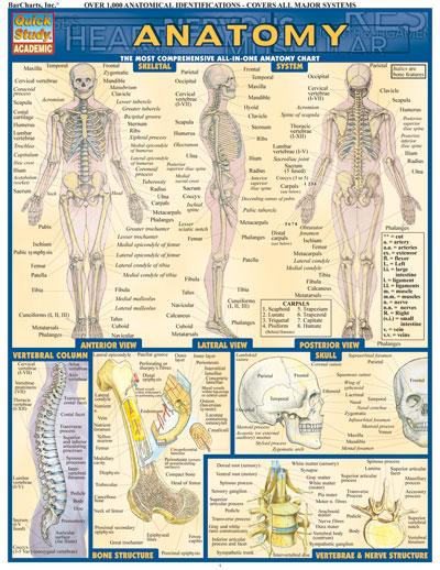 Dog Anatomical Diagram Manual Guide